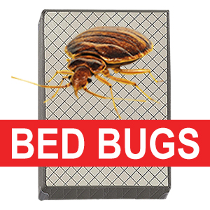 Recycle your bed bug invested box spring